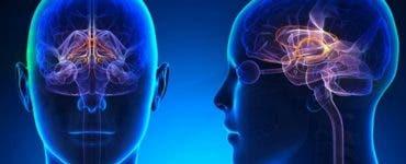 6 alimente care cresc nivelul dopaminei din creier. De-acum vei fi tot timpul fericit!