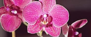 Aceste flori tind să înflorească la începutul primăverii, așa că trebuie să le acorzi o atenție specială