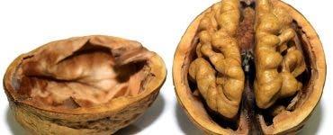 Alimente pentru memorie pe care să le consumi cât mai des. Nucile ocupă un loc fruntaș în acest top al alimentelor pentru creier.