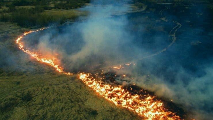 Incendiile din Pădurile Amazoniene. Fundația DiCaprio promite ajutor de 5 milioane de dolari