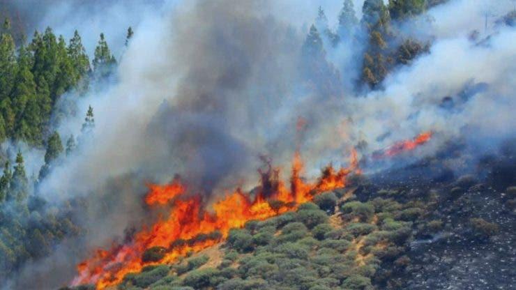 Zona turistică Gran Canaria evacuată în urma unui incendiu de vegetație