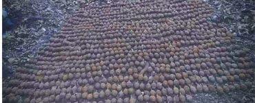 Aproximativ o mie de grenade din Primul Război Mondial au fost descoperite în Vrancea