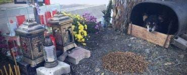 Povestea impresionantă a unui câine care veghează locul în care un tânăr și-a pierdut viața
