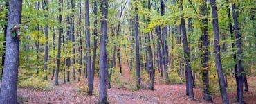 Un suspect de 17 ani a fost reținut în cazul pădurarului ucis într-o pădure din Iași