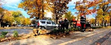 Accident în București. Un copac a căzut pe o mașină aflată în mers