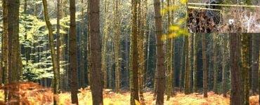 Copil cu dizabilități găsit dezbrăcat și abandonat în pădure. Făptașii au vrut să-i dea o lecție