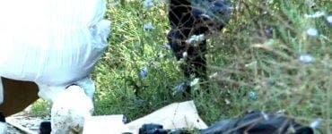 Fragmentele osoase descoperite lângă Caracal aparțin unor bărbați