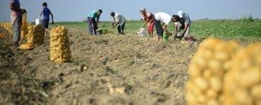 Caz de sclavie la Iași. Un bărbat și o femeie, forțați să muncească la o fermă din județ