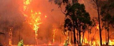 Incendiile din Australia. Trei persoane au fost puse sub acuzare