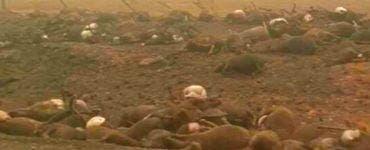 Bilanț devastator. Numărul animalelor ucise în incendiile din Australia a ajuns la 1 miliard