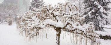 ANM anunță ninsori abundente în România. Care sunt zonele vizate