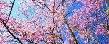 Motivul pentru care cerul este albastru. Ce nu poate percepe ochiul uman