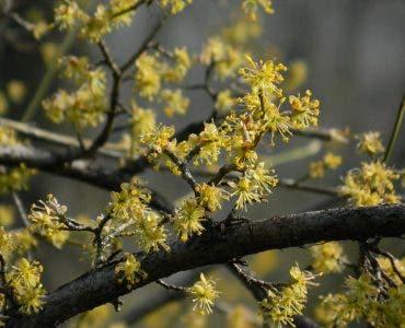 Prognoza meteo ANM 9 aprilie. Cum va fi vremea în București, Iași, Constanța sau Cluj – meteorologii anunță vreme de primăvară