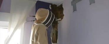 Aveau în casă un stup cu 80.000 de albine! Cum au reușit să scape de ele