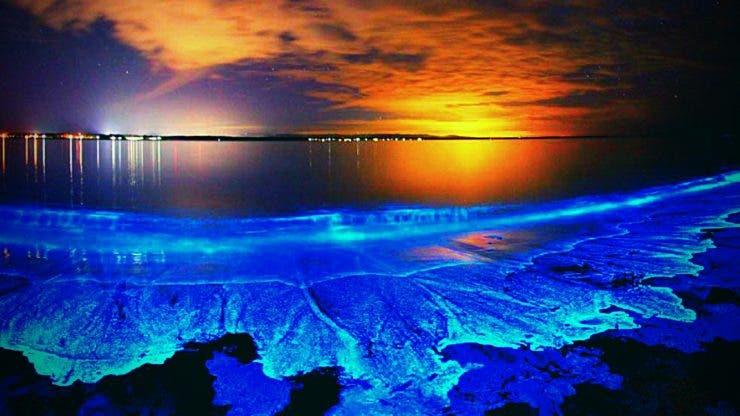 Bioluminiscența