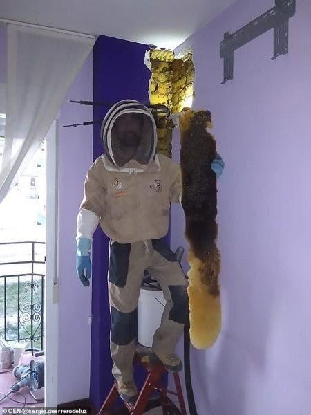 Cum arăta stupul cu 80.000 de albine