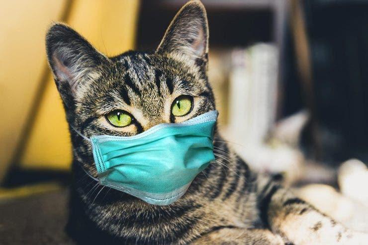 Coronavirus blana pisici și câini