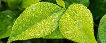 verzi frunzele copacilor