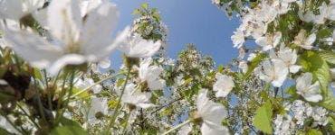 Vremea în România, 4 iunie 2020. ANM a anunțat temperaturile vor crește și se vor apropia de cele normale