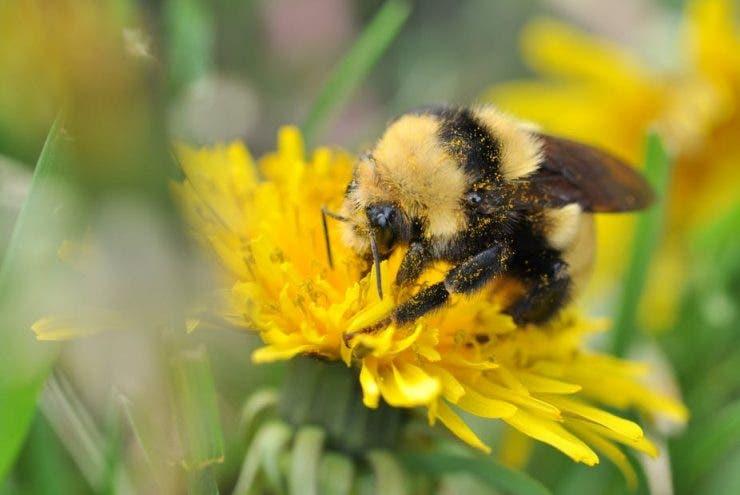 Înțepăturile provocate de albine