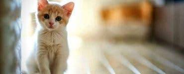 Ce înseamnă dacă visezi pisici