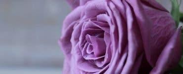 Ce floare ți se potrivește în funcție de luna nașterii