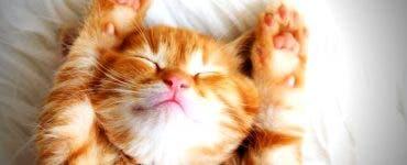 De ce torc pisicile