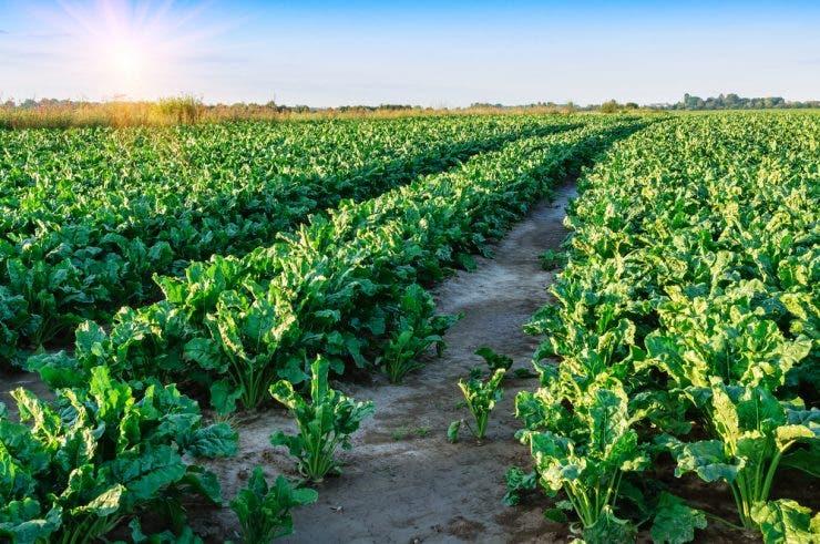 ce legume sa cultivam