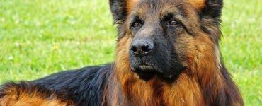 A murit primul câine din SUA testat pozitiv cu Covid-19 . Medicii veterinari resping ideea că virusul e unicul vinovat de moartea animalului