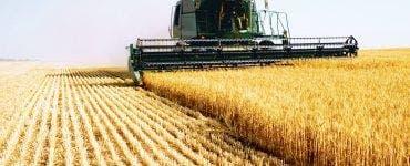 România înregistrează în ultimii ani scăderi serioase la recolta de grâu. Producția a scăzut anul acesta cu 40 %