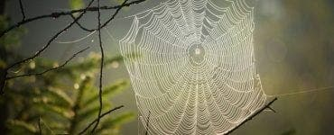 ce înseamnă când visezi păianjeni