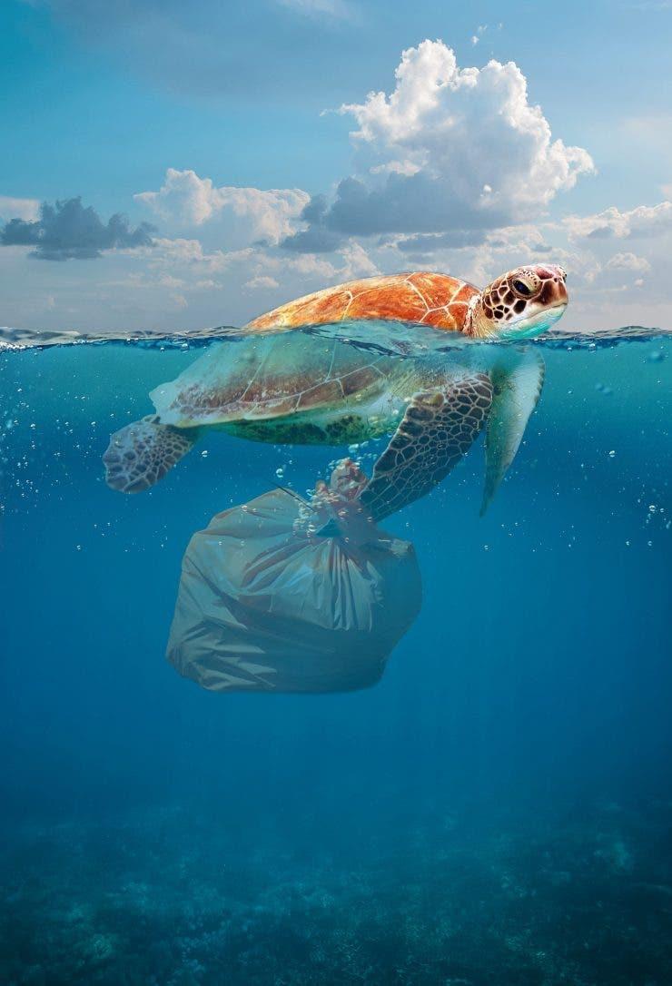 Plasticul dauneaza