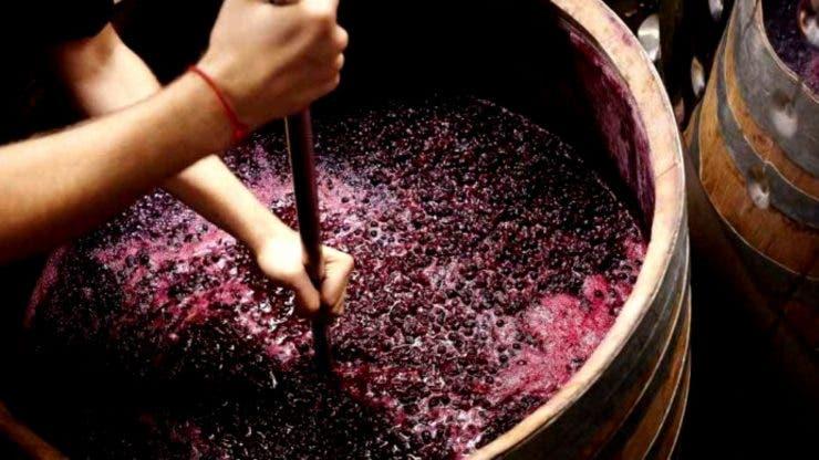 Must fermentat