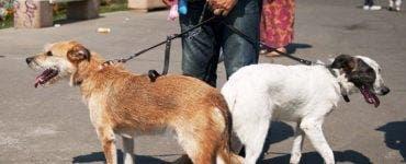Ce se va întâmpla cu animalele de companie în China