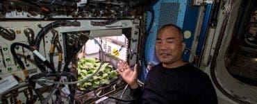 Un astronaut a reușit să crească prima recoltă de ridichi
