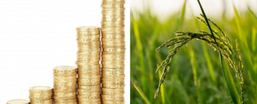 Cine nu va beneficia de subvențiile Apia în 2021