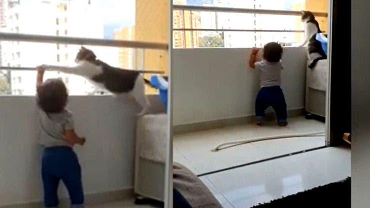 O pisică a devenit erou după ce a salvat un copil
