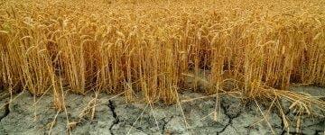 Seceta din 2020 a creat multe probleme! Ce alimente s-au scumpit
