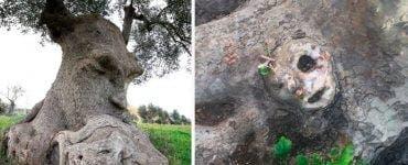 Cum arată cei mai ciudați copaci din lume! Parcă sunt de pe altă planetă