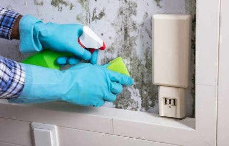 Metode rapide și simple prin care poți curăța mucegaiul