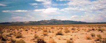 """Culturi exotice în """"Sahara Olteniei"""". (1)"""