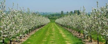 Tratamente eficiente pentru pomii fructiferi