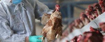 Virusul de gripă aviară s-ar putea transmite de la om la om! Anunțul făcut de specialiștii ruși