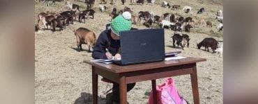 Povestea incredibilă a unei fetițe de 10 ani din Italia! Face școala online între capre, pe vârf de munte
