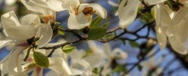 Lista completă a numelor care sunt sărbătorite de Florii