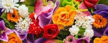 Cele mai frumoase felicitări pentru românii care își serbează ziua de Florii. FOTO