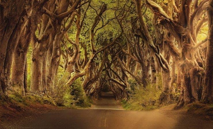 Horoscop celtic! Copacul mistic care te protejează în funcție de data nașterii