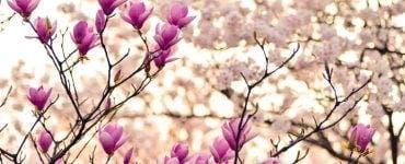 Prognoza actualizată pentru Florii 2021