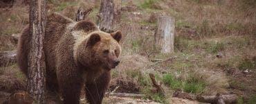 De teama a ursului a stat toata noaptea intr-un copac