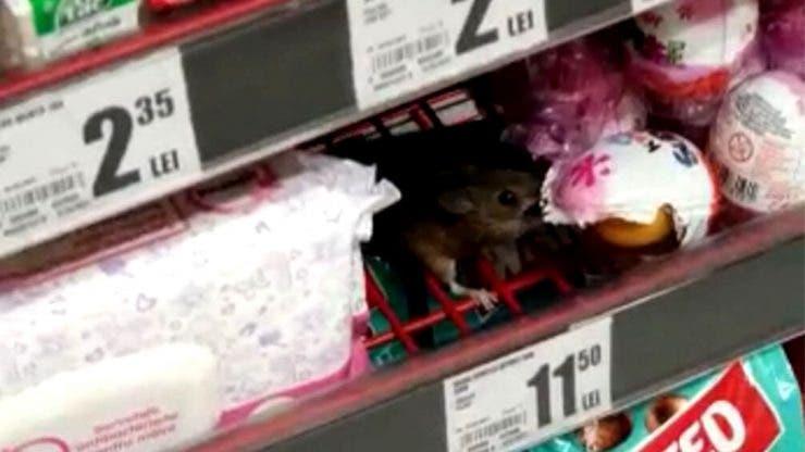 Imagini șocante surprinse într-un supermarket din România